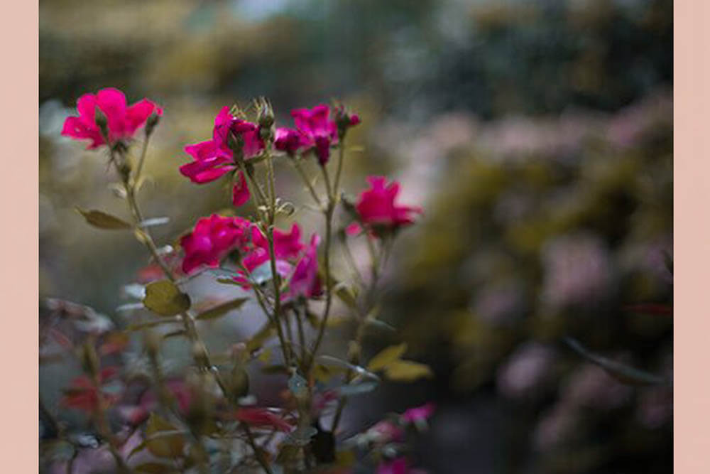 0_giardino_lacasetta