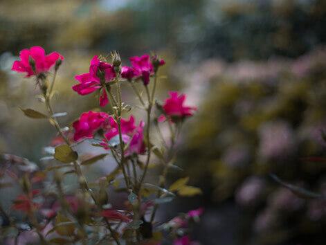 giardino_lacasetta_1